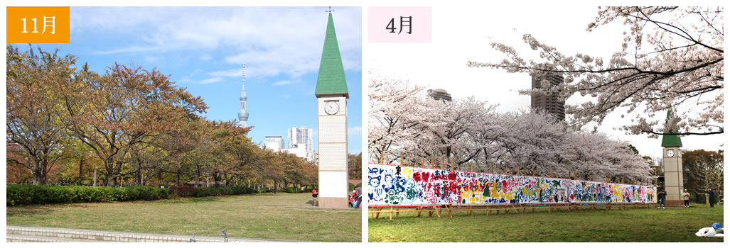 BRISK3年目突入!猿江公園でのお花見―桜―